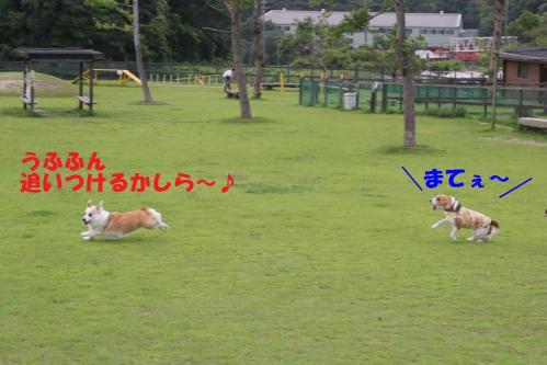 IMG_6777-2.jpg