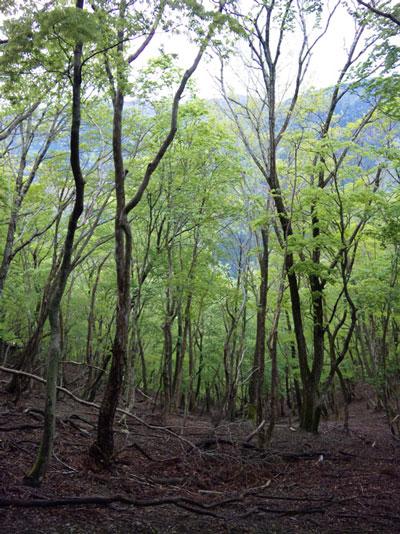 皆子山(標高972m)|滋賀県|2012/05/12|山ガール|登山|日帰り