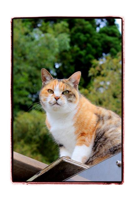 猫 ねこ ネコ 動物 写真