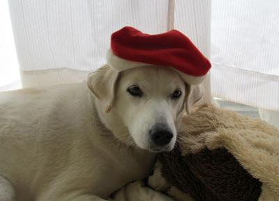 赤い帽子が似合うかな?