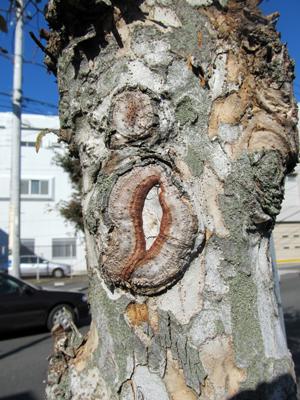 木の唇・・・・