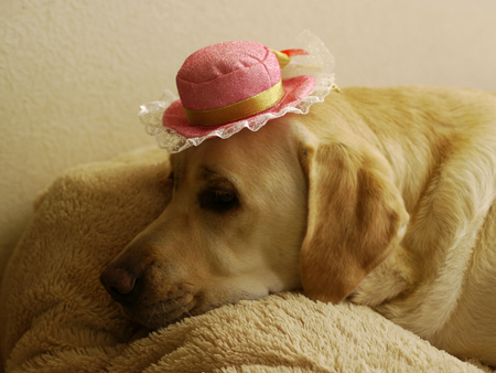 帽子似合わないね・・・