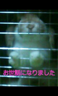 non_201401071448046c1.jpg