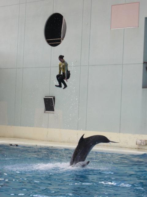イルカ飼育員のジャンプ?