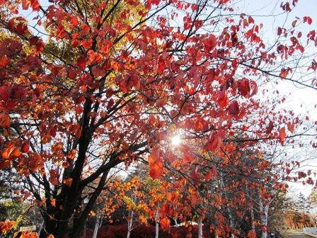 紅葉もそろそろ終り・・・。