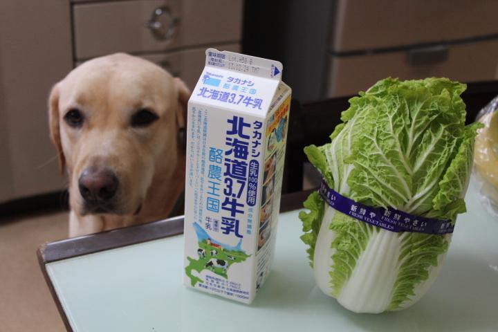 ミニ白菜1