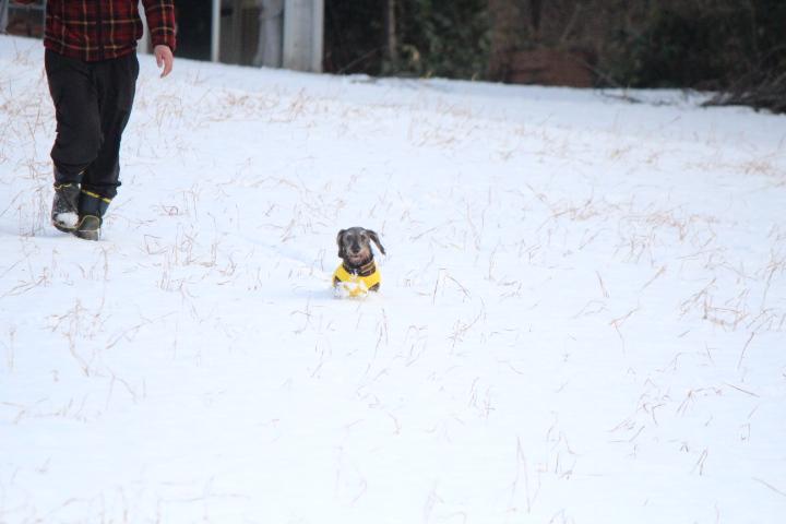 ココにゃん雪