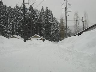 20110116生杉 011