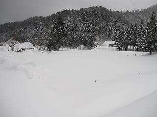 20110116生杉 040