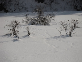20110123生杉 053