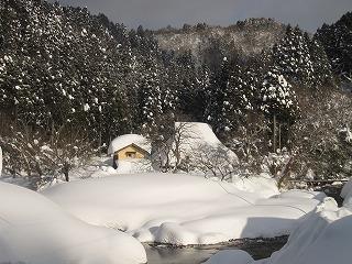 20110130生杉 002