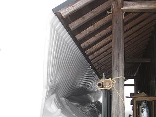 20110130生杉 004