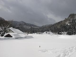 20110130生杉 010