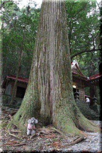 大杉と空♪