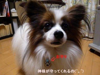 高尾山薬王院 ワン・ニャンお守