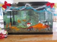 リハ室金魚