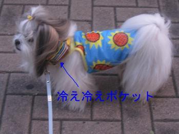 IMG_1666-201007.jpg