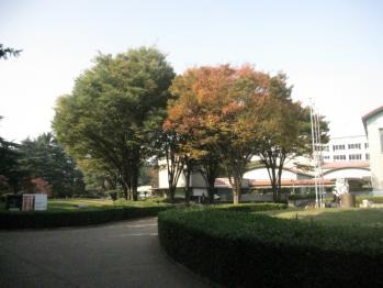 IMG_5340-201011.jpg