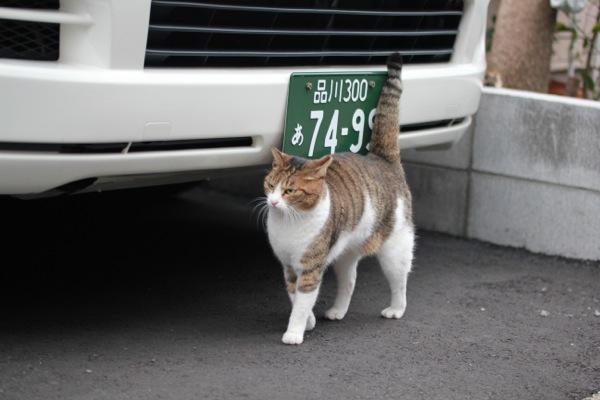 kikiji2.jpg