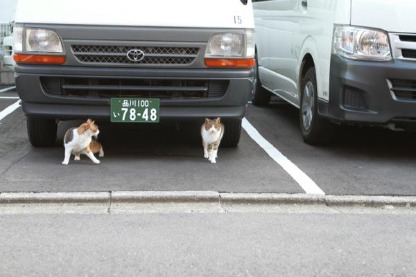 kinokiji1.jpg