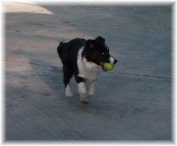 初ボール遊び。