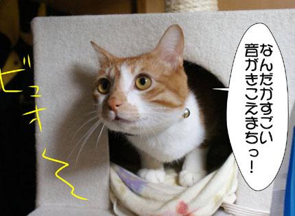 1_20101110000756.jpg