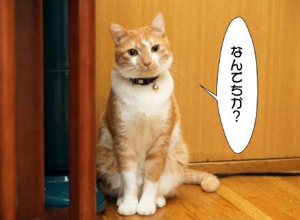 1_20101222010922.jpg