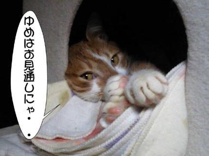 2_20101104004221.jpg