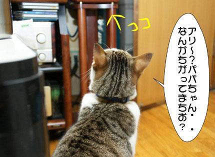 4_20101113030516.jpg