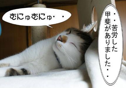 5_20101023174655.jpg