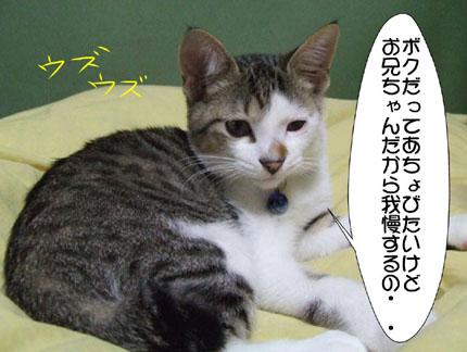 6_20101102212500.jpg