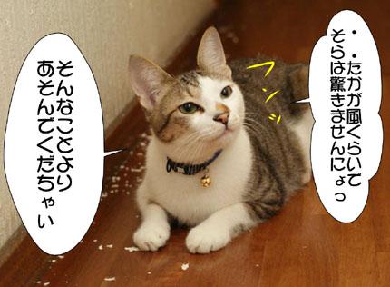 6_20101110000755.jpg