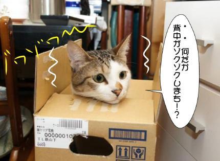 6_20101126030510.jpg