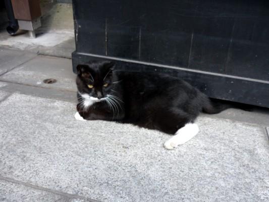 帝釈天の猫Ⅱ