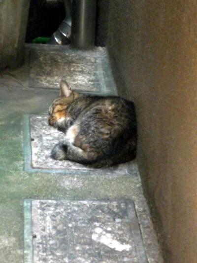 鰻屋の横で眠る猫