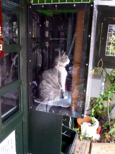猫喫茶の美人猫