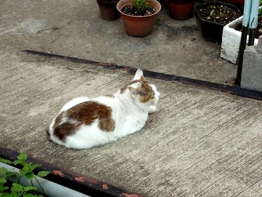 ふてぶてしい猫その1