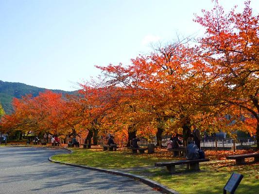 京都-仁王門通り疎水その2