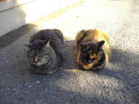 会社近くの仲良し猫