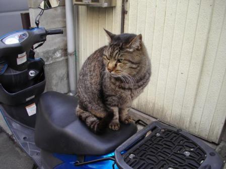 お稲荷さんの猫
