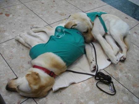 スパコミ盲導犬
