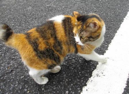 八百屋さんの猫