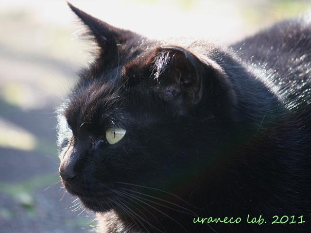 2月28日黒猫逆光3