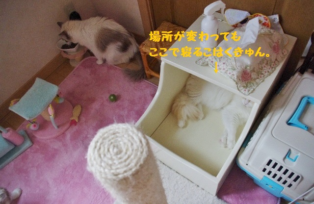 子猫部屋IMGP1368