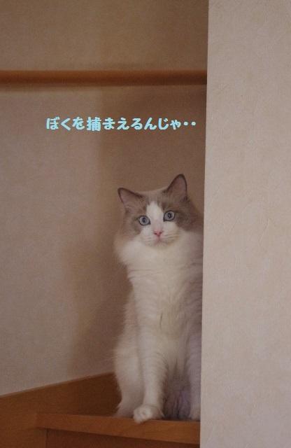 NNIMGP0569.jpg