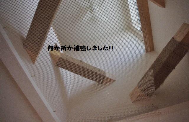 NNIMGP3795.jpg