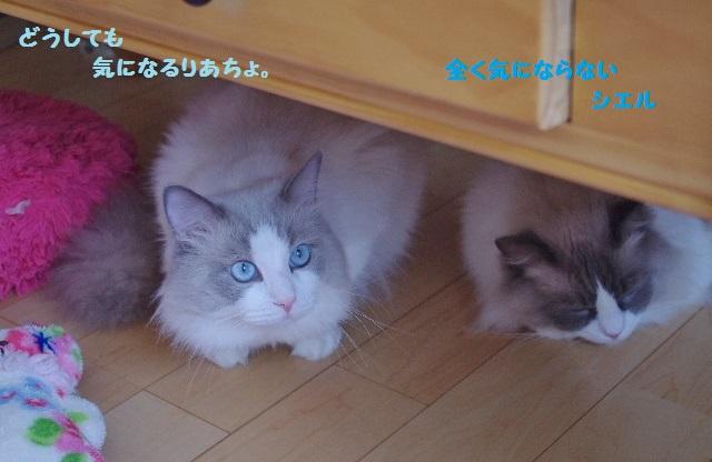 NNIMGP4559.jpg