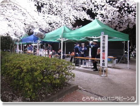 桜ライトアップ3