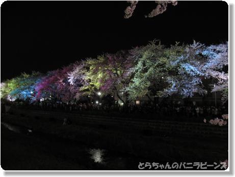 桜ライトアップ8