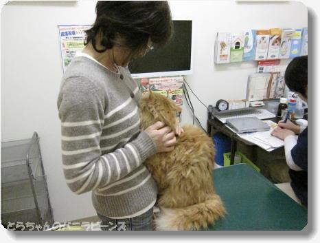 ワクチン助けておかあさん